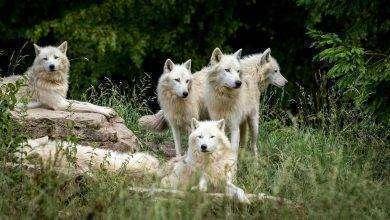 Photo of بماذا تشتهر بلغاريا في الحيوانات