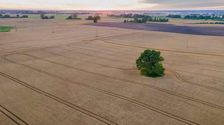 بماذا تشتهر ليتوانيا في الزراعة