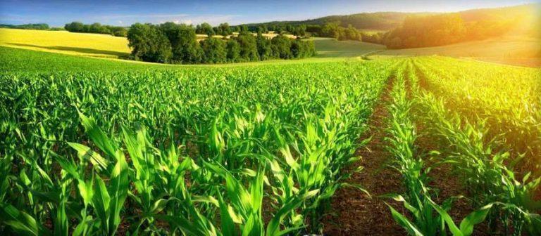 الزراعة في ولاية كارولاينا الجنوبية