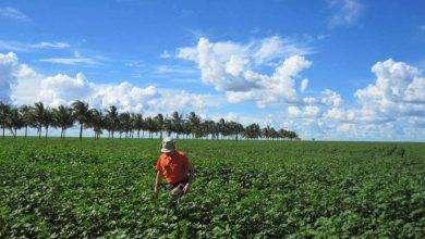 Photo of بماذا تشتهر البرازيل في الزراعة