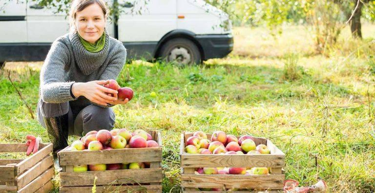 بماذا تشتهر السويد في الزراعة