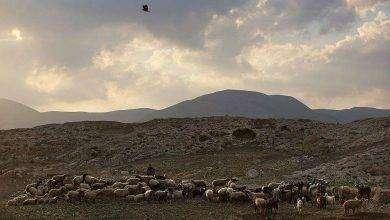 Photo of الضفة الغربية تحت الحكم الاردني