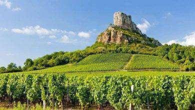 Photo of بماذا تشتهر فرنسا في الزراعة