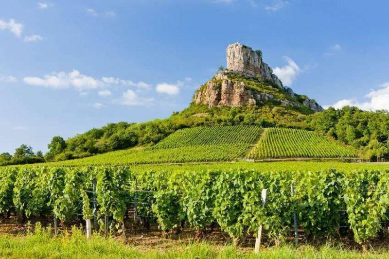بماذا تشتهر فرنسا في الزراعة