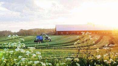 Photo of بماذا تشتهر السويد في الزراعة
