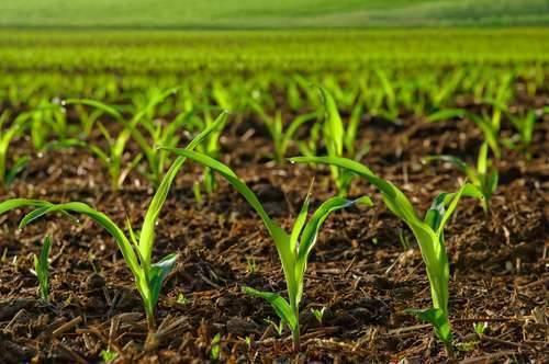 بماذا تشتهر هولندا في الزراعة