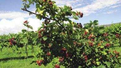 Photo of بماذا تشتهر ولاية نيومكسيكوا الأمريكية في الزراعة