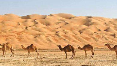Photo of المناخ الصحراوي في سلطنة عمان