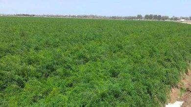 Photo of بماذا تشتهر سلطنة عمان في الزراعة