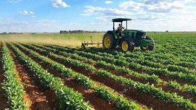 Photo of بماذا تشتهر جنوب أفريقيا في الزراعة