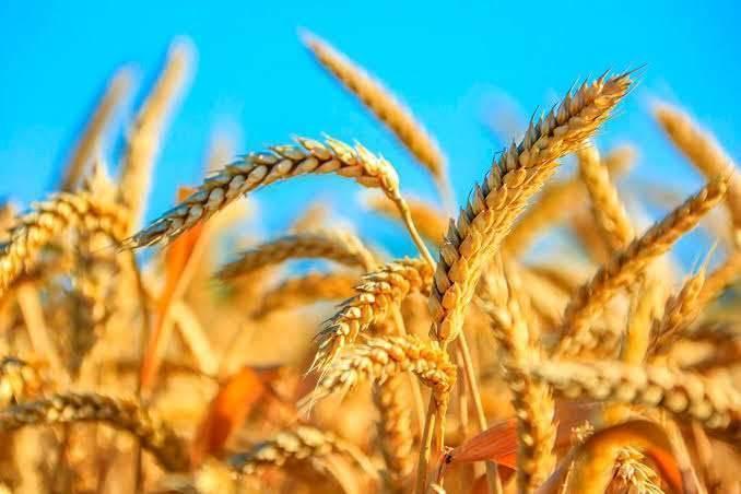 بماذا تشتهر تركمانستان في الزراعة