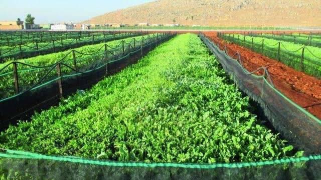 بماذا تشتهر لبنان في الزراعة