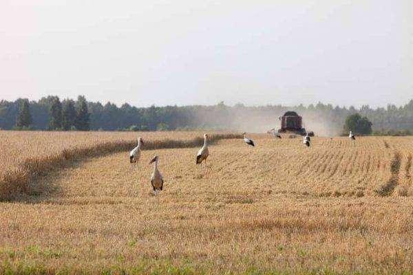 الانتاج الزراعي في لاتفيا