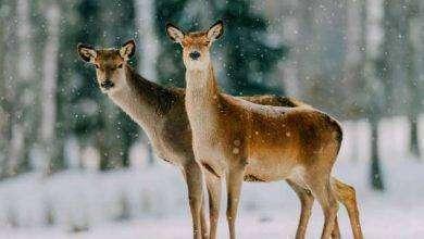 Photo of بماذا تشتهر لاتفيا فى الحيوانات