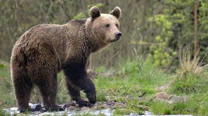 بماذا تشتهر مقدونيا فى الحيوانات
