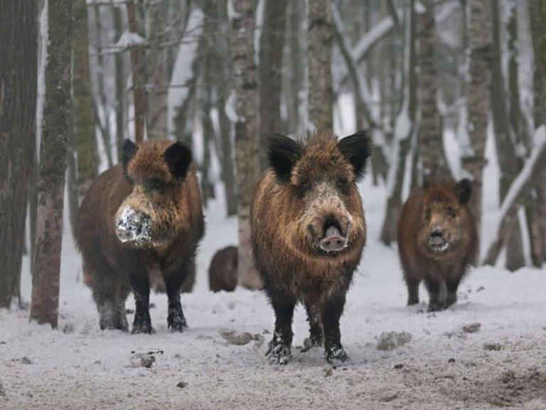 بماذا تشتهر لاتفيا فى الحيوانات