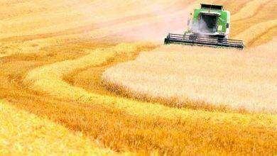 Photo of بماذا تشتهر أوكرانيا في الزراعة