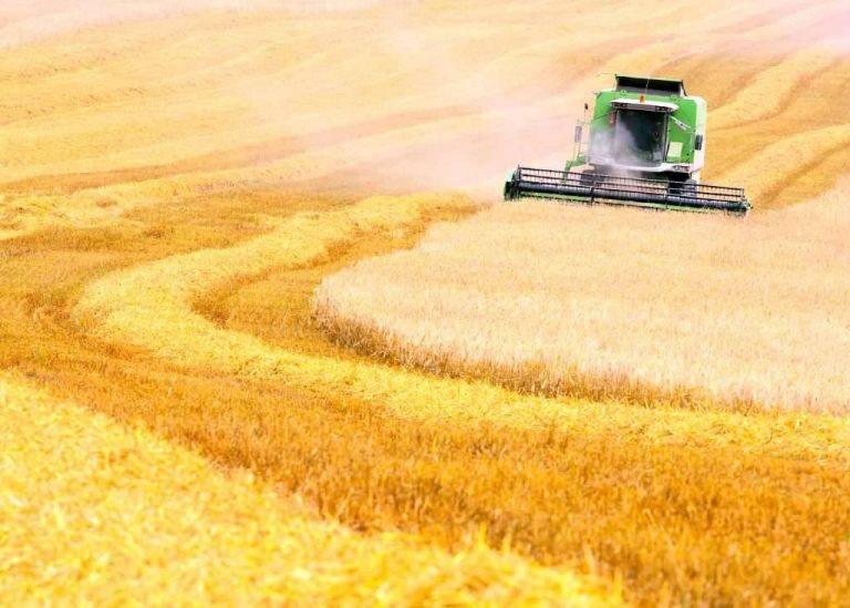 بماذا تشتهر أوكرانيا في الزراعة