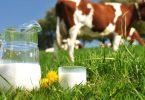 فوائد حليب البقر العضوي