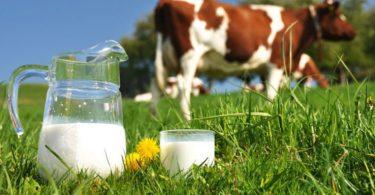فوائد حليب البقر لمرضى السكري