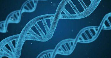 ما هو الجين