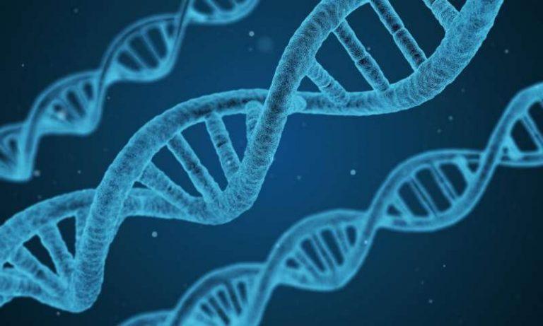 Photo of ما هو الجين… معلومات عن تعريف الجينات وأعدادها وطريقة تناسخها