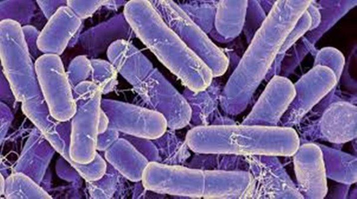 ما هو مفهوم البكتيريا