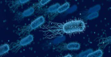 ما هو مفهوم البكتيريا ؟