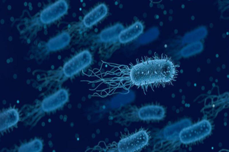 Photo of ما هو مفهوم البكتيريا