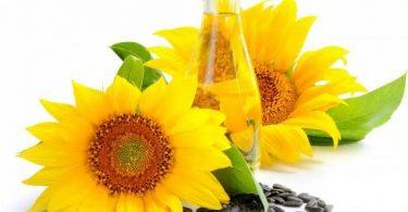 فوائد زيت دوار الشمس لتطويل الشعر