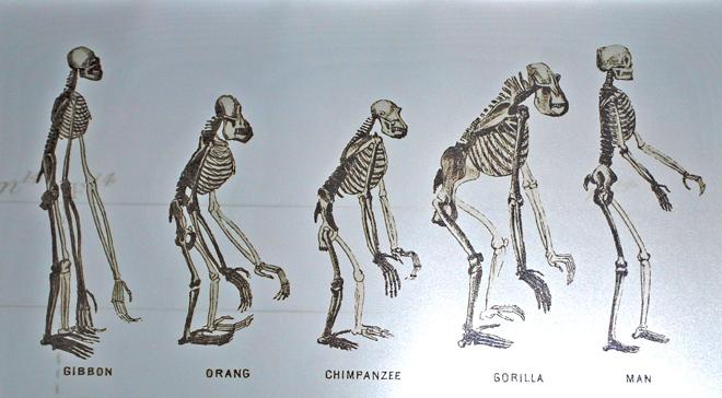 Photo of ما هو مفهوم التطور