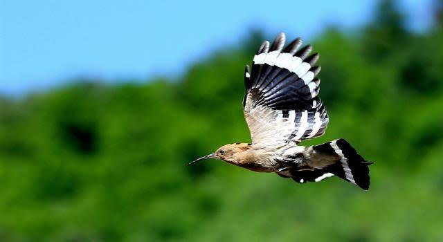 خواطر عن الطيور تويتر