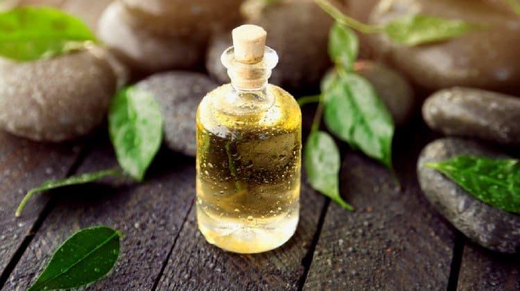 صورة فوائد زيت شجرة الشاي للاكزيما