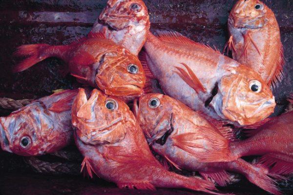 أسماك يجب تجنُّبها