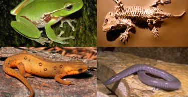 تعريف علم الزواحف والبرمائيات