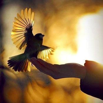 خواطر عن السلام من الفلاسفة