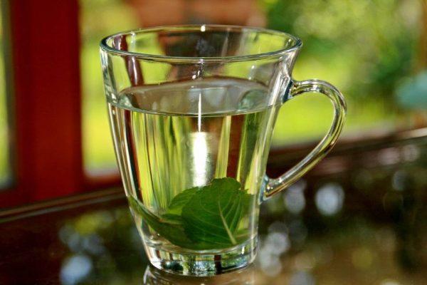 شاي النّعناع