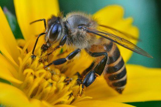 من أين يأتي العسل؟