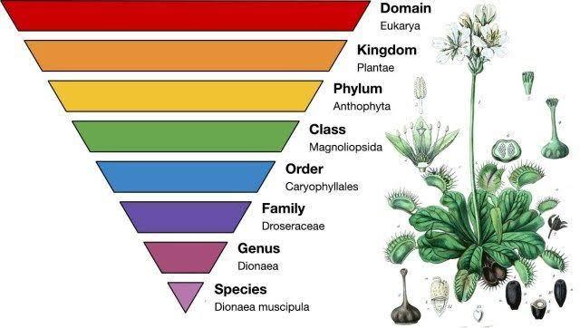 تعريف علم التصنيف