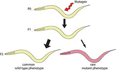 تعريف علم الوراثة الجزيئية