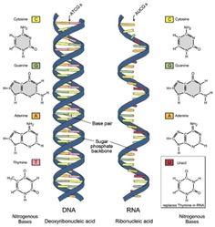 Photo of تعريف علم الوراثة الجزيئية