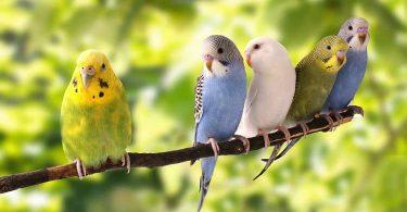 أفضل أنواع الطيور