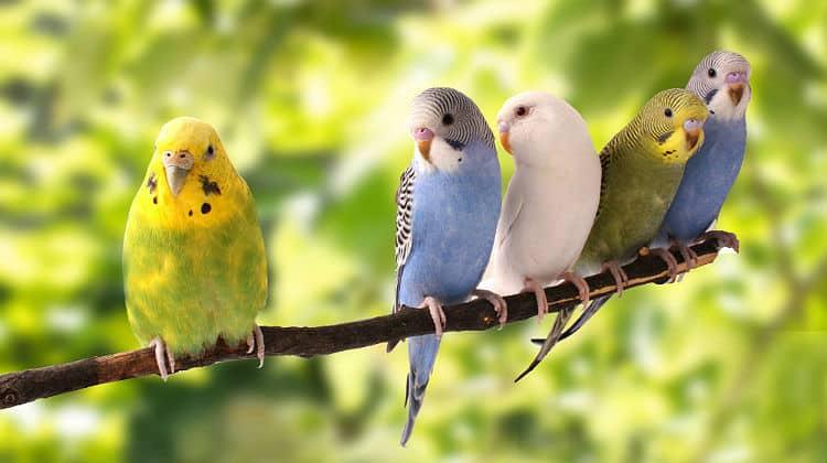 Photo of أفضل أنواع الطيور… معلومات عن أشهر 10 طيور يمكن تربيتها في المنزل