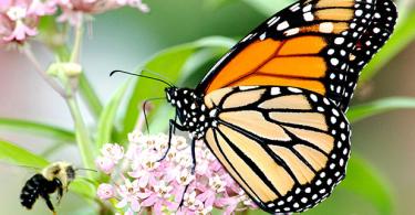 تعريف علم الحشرات