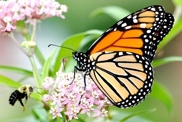 Photo of تعريف علم الحشرات