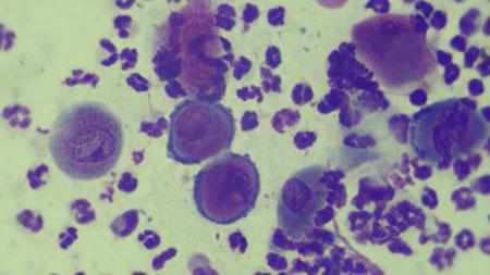 تعريف علم الخلايا