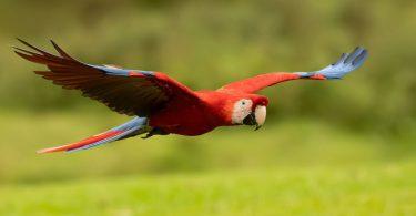 افضل انواع الطيور للتجارة