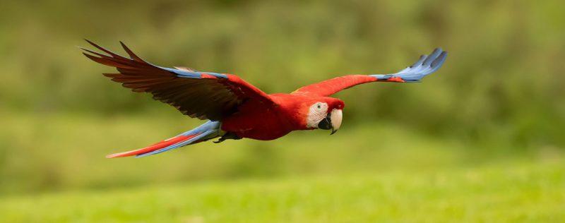 Photo of افضل انواع الطيور للتجارة… أشهر 8 أنواع للتّجارة والتّربية في العالم