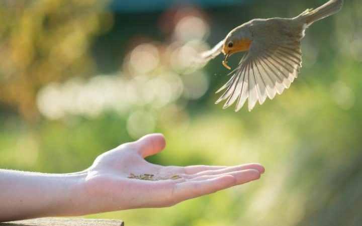 Photo of افضل انواع الطيور للتربية المنزلية… أشهر 8 طيور للتربية في المنزل