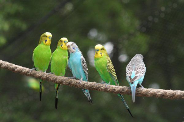 أجمل أنواع الطّيور